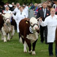 Three Counties Show at Three Counties Showground